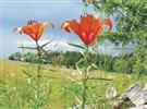 Thematische Gartenführung