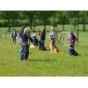 Gebrauchs-Hunde-Verein Nordheide e.V.